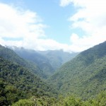 Ciudad Perdida: Surrounded by the rain forest...