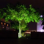 Lighted tress.