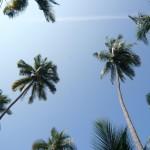 Palms. Palms. Palms.