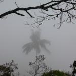 Wax palm seen through the clouds.