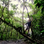 Cloud forest Tarzan.