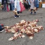 ... chickens ...