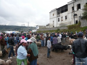 The animal market.