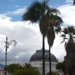Palms and blue sky.