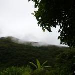 Jungle view.