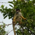 A monkey.