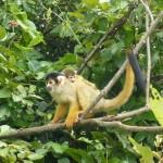 Two monkeys.
