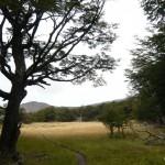 Beautiful meadows.