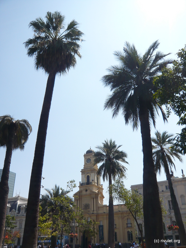 Santiago. Palms in the city center.
