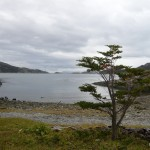 Tree in front of Beagle channel.