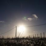 Sun over meadow.