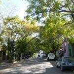 Green streets. Few cars.
