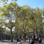 Green plazas.