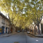 Avenue of tress. Downtown.