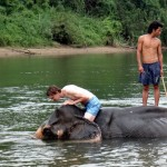 Bathing with the elephants. Sooo cool!
