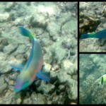 Colorful fishes.