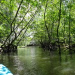 Inside the mangroves.