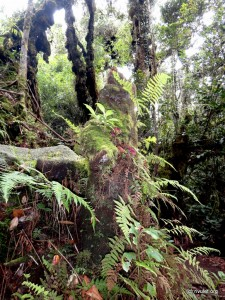 Inside the Mossy Forest.