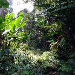 Jungle vegetation.