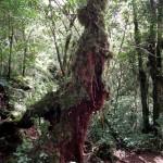 Hike through the jungle...