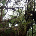 The Mossy Forest.