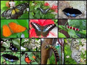 Penang Butterfly Farm: Butterflies in all colors.