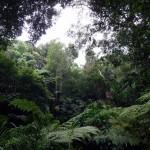 The Tropical Spice Garden.