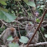 Monkey family.
