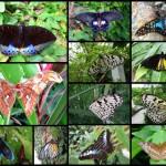 Butterfly farm: A lot of butterflies.