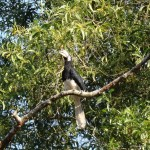 Bird in the tree.