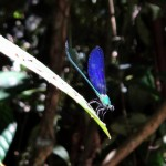Colorful dragonfly.