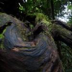 Big roots.