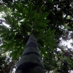 Little tree.