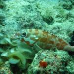 Orange fish.