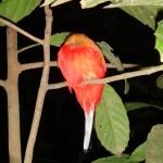 Red bird ;-)