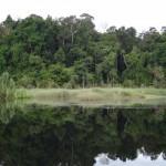 Jungle vegetation around.
