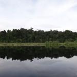 Lake and jungle.