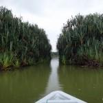 Boat tour on Tasik Chini.