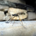 Funny fly.