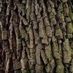 Old bark.