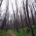 Wonderful trails.