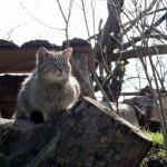 A wildcat (not in the wild).