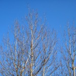 Trees and blue sky.