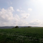 Rolling hills of the Odenwald.